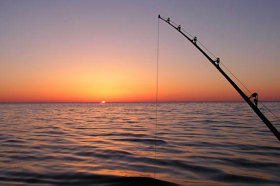 Fiskebild