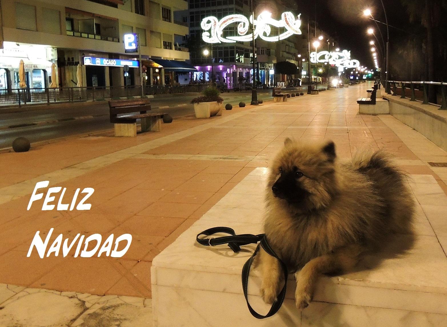 Görans hund Keezo (2)